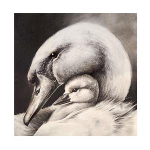 swan large.jpg