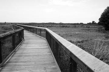 Paynes Prairie Preserve State Park, Micanopy, Florida