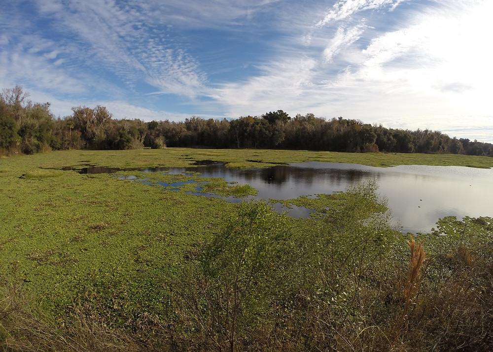 Paynes Prairie Reserve
