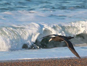 Migratory birds arriving from Antarctica