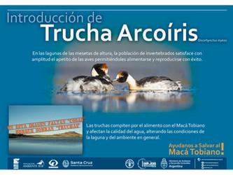 Proyecto Macá Tobiano: Avanzan  con el control de la trucha Arcoíris