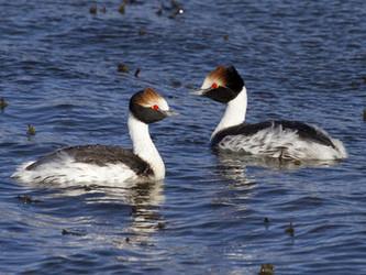 Crece el apoyo para declarar Monumento Natural Nacional al macá tobiano