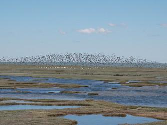 Concluyen Plan de Manejo para Reserva Provincial de Aves Migratorias