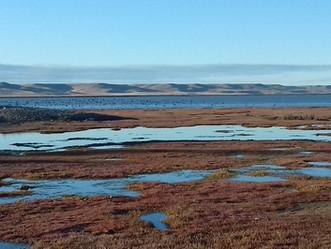 Aves que invernan en el estuario del río Gallegos