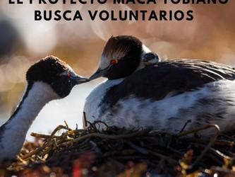 Búsqueda de voluntarios Programa Patagonia