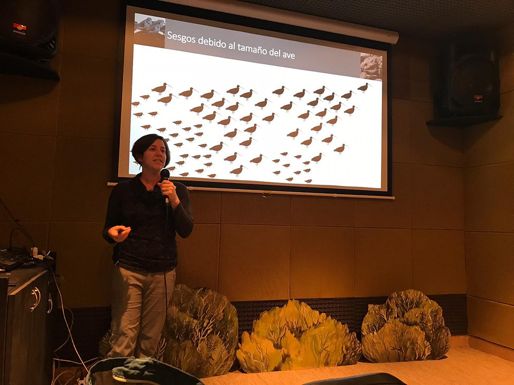 Mónica Iglecia, Shorebird Habitat Management de Manomet