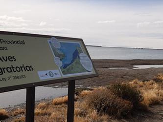 Avances en la conservación de las Aves Playeras en la Reserva Provincial