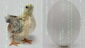 Digital Strategy or Software, Chicken or Egg?