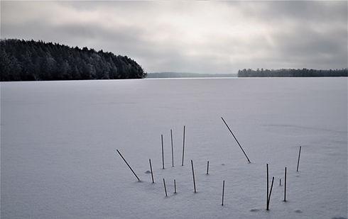 Lake Grasses 1-2-21 Ben Johnson.jpg