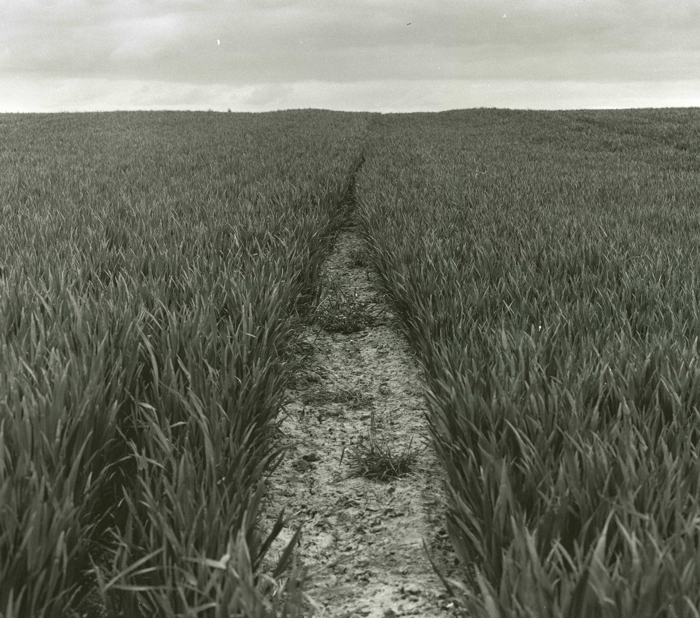 'The Open Fields' - Medium Format Photog