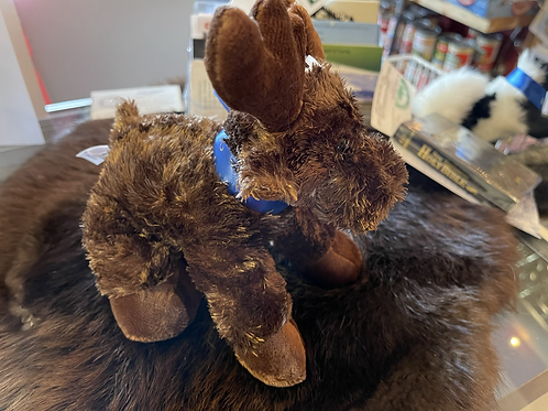 Moose on Loose in Gould, Colorado plush toy