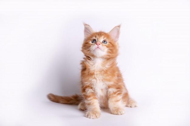 kiero.co | Animales y Mascotas | Gatos