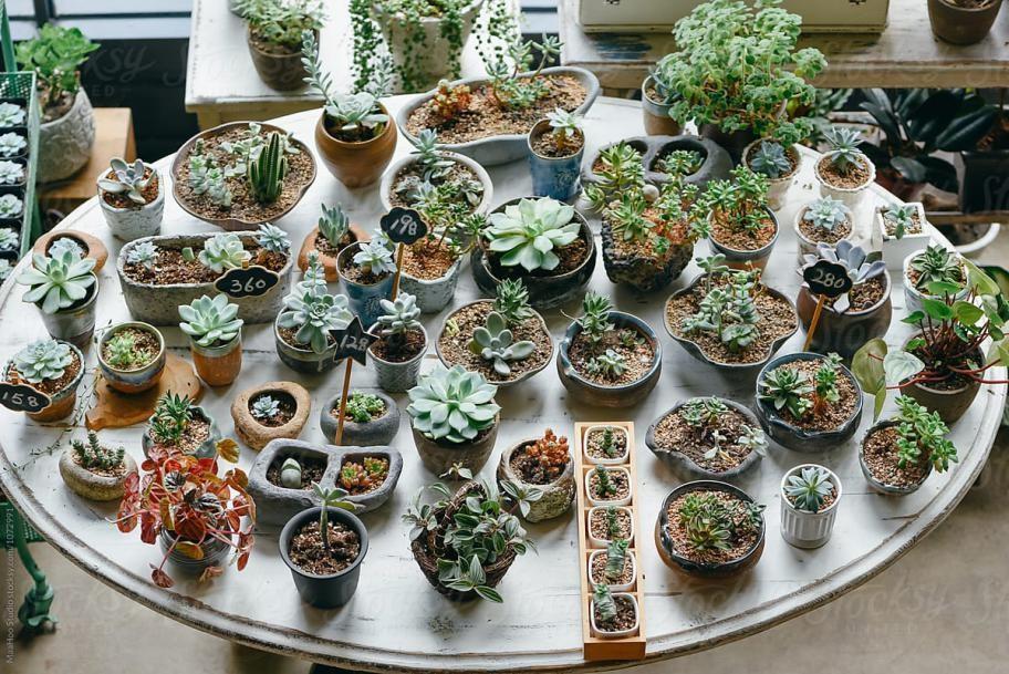 kiero.co | Cactus y suculentas