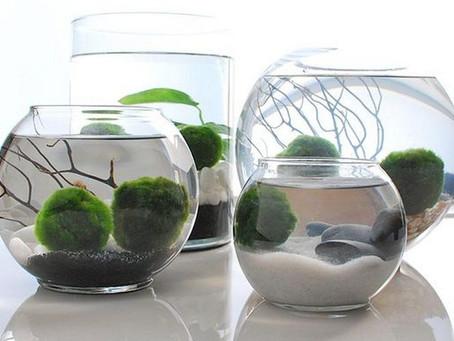 Cómo hacer un jardín acuático para interiores.
