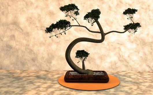 kiero.co | cuidar un bonsai