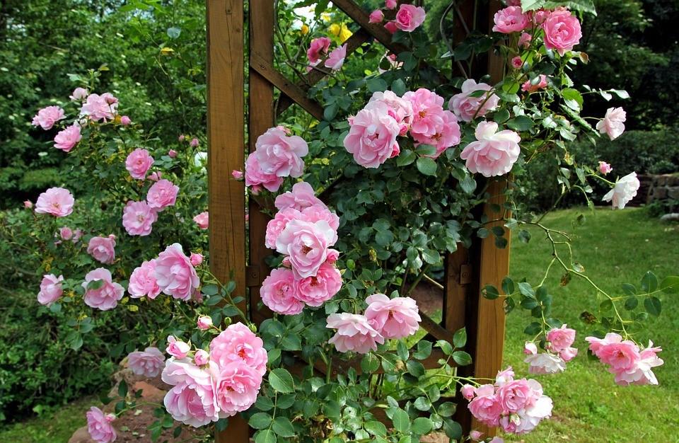 kiero.co   jardines y exteriores