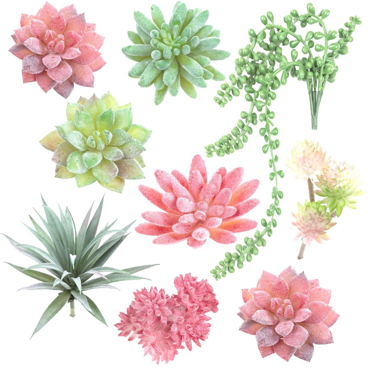 kiero.co | plantas suculentas | producto