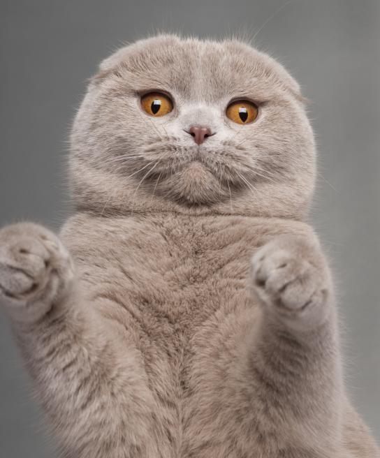 kiero.co | accesorios para gatos