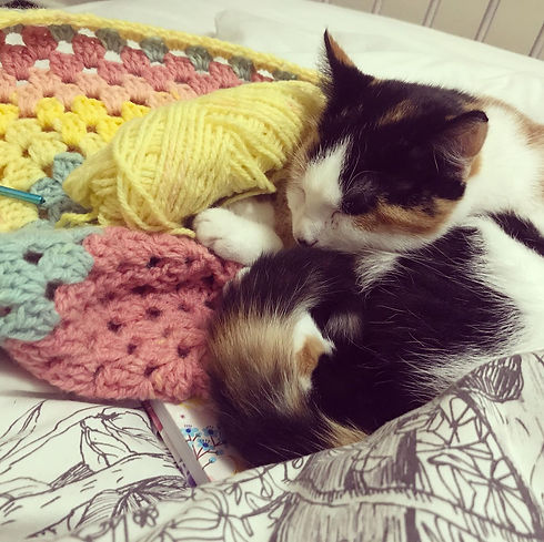 Cat with crochet blanket