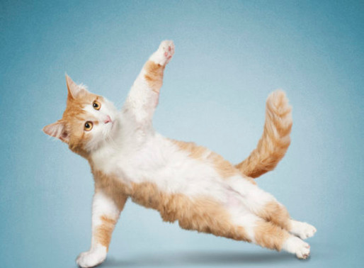 Cat Yoga at the LHS!