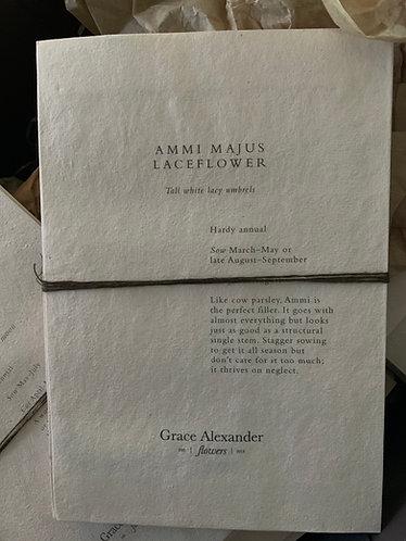 GRACE ALEXANDER SEEDS - AMMI MAJUS LACEFLOWER