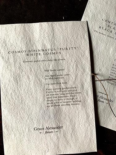 GRACE ALEXANDER SEEDS - COSMOS PURITY WHITE COSMOS BIPINNATUS
