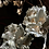 Thumbnail: WHITEWASH DRIED HAKEA VICTORIA