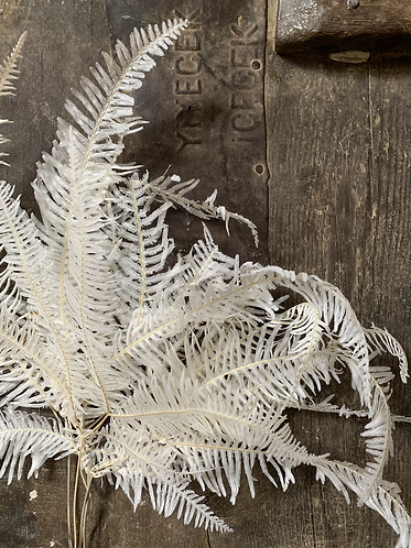 BLEACHED DRIED JAPANESE MOUNTAIN FERN