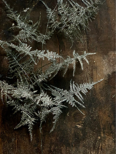 PLATINUM DRIED FERN BUNDLE (5 STEMS)