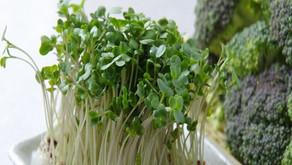 A Case For Eating Broccoli Sprouts