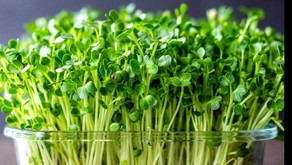 Micro greens Are coming!