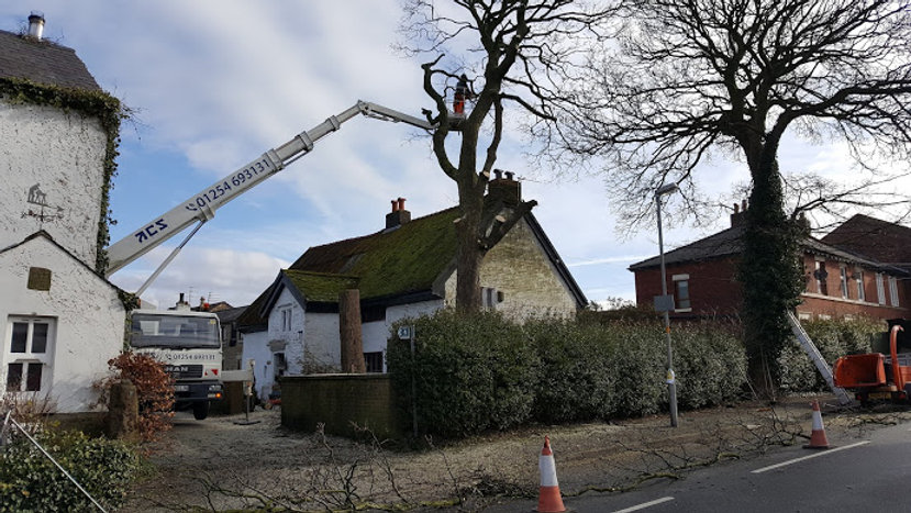 Tree Removal Preston