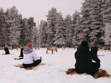 Poroja ja joogaa Kuusamon maisemissa (Porojooga)