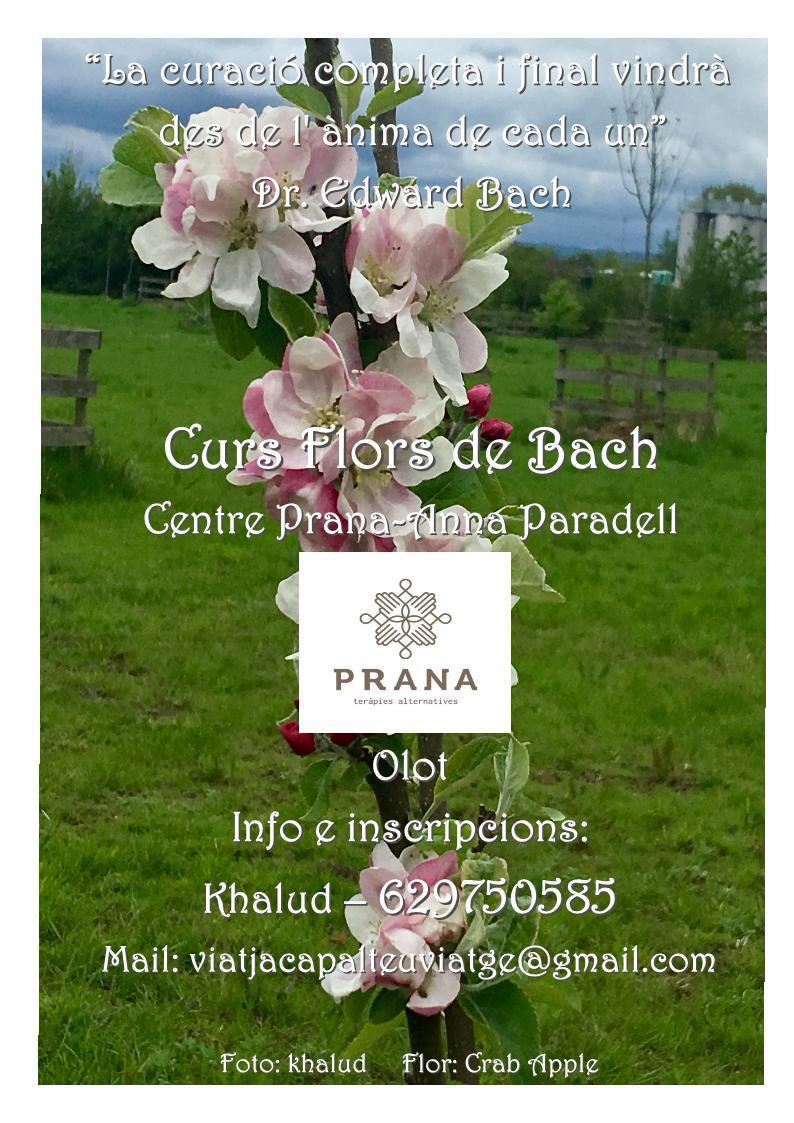 Curs Flors de Bach