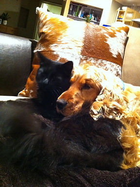 Copper and Nitro cuddling on the couch