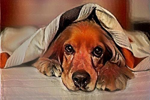 Σκύλoς (επεξεργασμένη φωτογραφία)