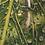 Thumbnail: Regentropfen