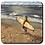 Thumbnail: Achterbahn - Arbeitstag des Surfers