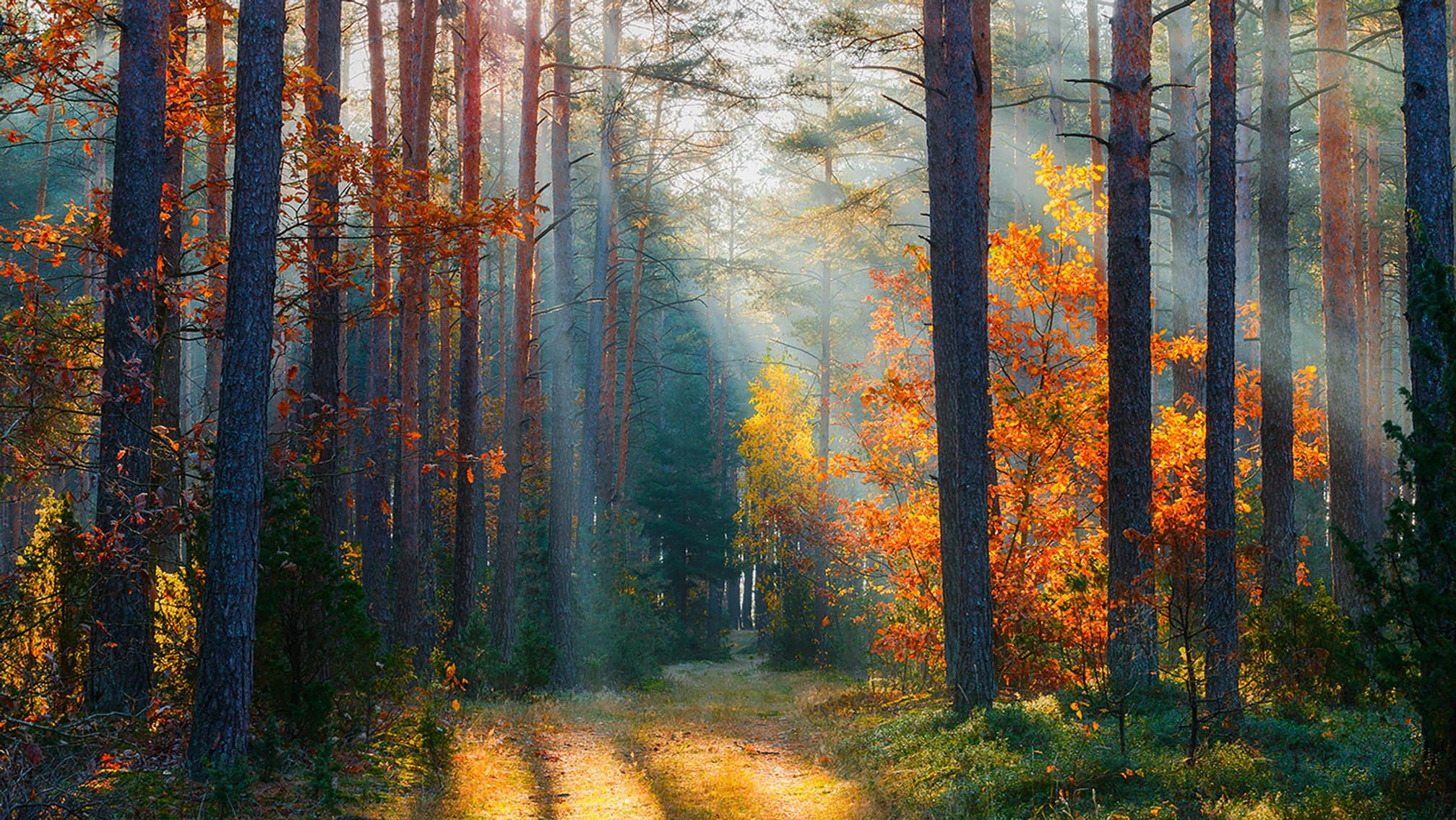 Tierwald