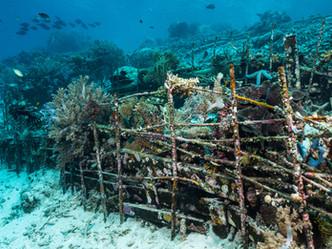 Aprueban uso de arrecifes artificiales para mitigar erosión costera