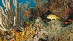 Nueva ley declara arrecifes de coral como estructuras esenciales