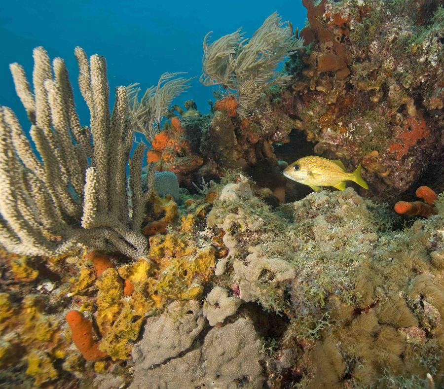 El índice de mortalidad supera el 80 % en algunos arrecifes. (Shutterstock)