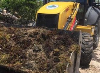 DRNA y Municipio de Fajardo limpian sargazo en Las Croabas