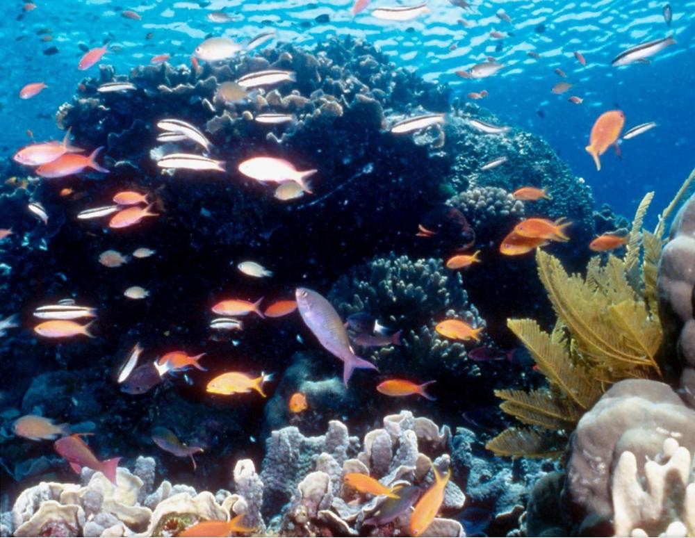 La investigación realizada por 16 universidades asegura que los océanos se están recuperando y que podrían seguir haciéndolo si en los próximos años se aplican una serie de medidas que consolide el proceso. (Archivo)