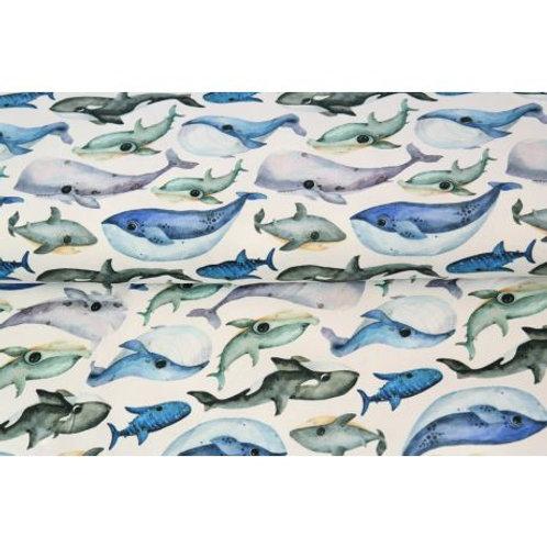 Jersey stenzo baleines