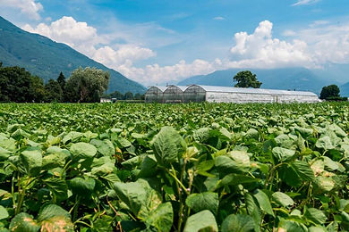 The Swiss and Ticino farms focus on direct sales