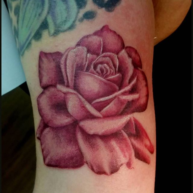 Pink rose from last week