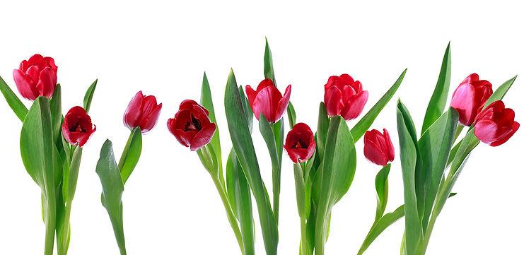 img fiori finti.jpg