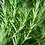 Thumbnail: CLEANSER PURIFICATION BLEND – FLOWER COLLECTION - für jeden Hauttyp