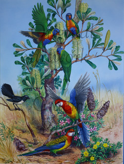 'Lorikeets, Rosellas and Willy Wagtail' - SOLD